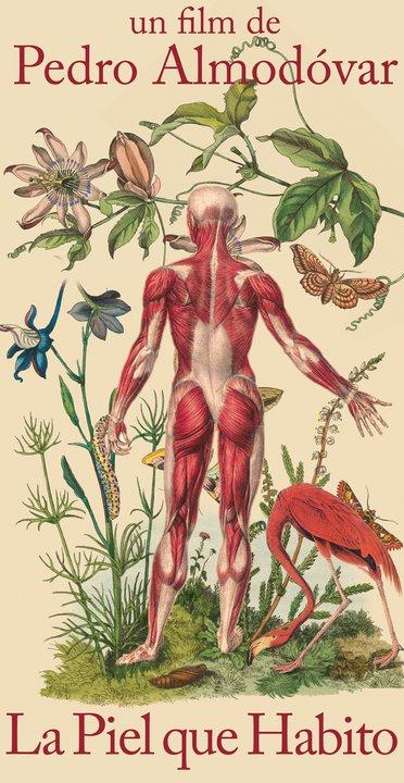 Carteles anatómicos.